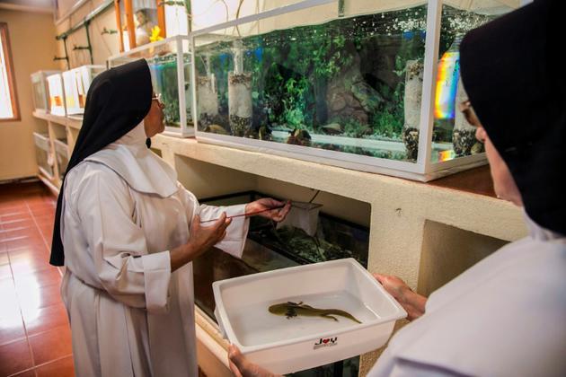 Les soeurs Ofelia Morales Francisco (à gauche) et Rosa Cortez s'occupent d'aquariums d'élevage de salamandres aquatiques, dans leur monastère au Mexique près du lac Patzcuaro, le 22 août 2018 [ENRIQUE CASTRO / AFP]