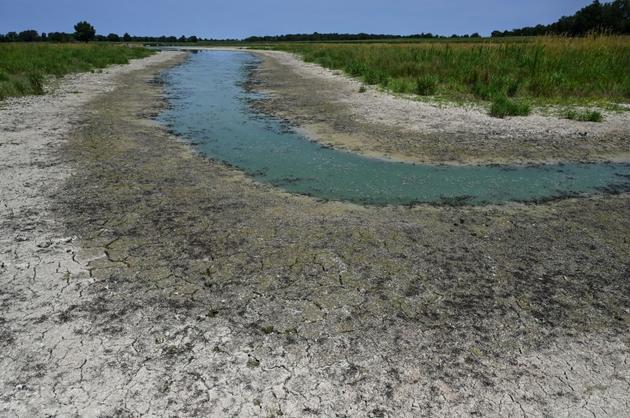 Un étang asséché, le 22 juillet 2019 à Villars-les-Dombes, dans l'Ain [PHILIPPE DESMAZES / AFP]