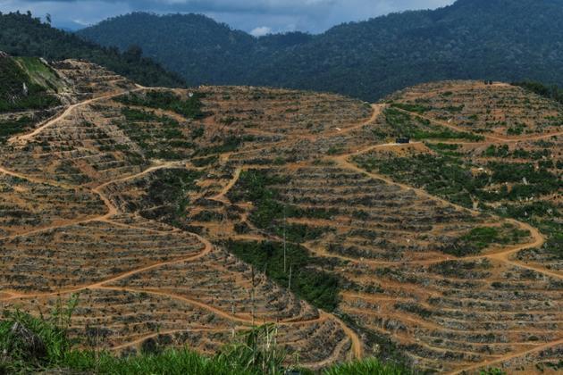 Des plantations de durians à Raub en Malaisie, le 19 décembre 2018 [Mohd RASFAN / AFP]