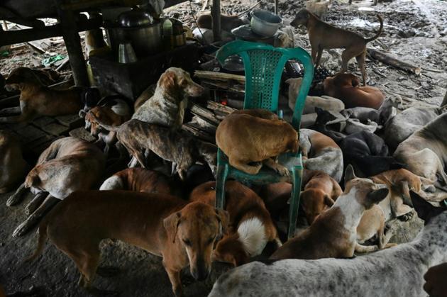 Des chiens errants au refuge Thabarwa, le 4 juillet 2019 dans les environs de Rangoun, en Birmanie [Ye Aung THU / AFP]
