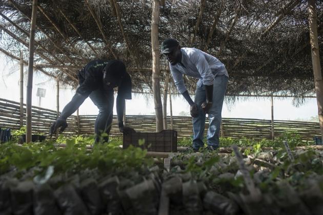 P.J. Okocha (d) cofondateur de PS Nutrac et l'ingénieur agronome Gbolahan Falarin (g) inspectent les nouveaux semis, le 5 juin 2018 à Wasinmi, près d'Abeokuta, au Nigeria  [STEFAN HEUNIS / AFP]