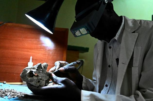 Un employé du musée national de Nairobi nettoie un fossile, le 23 mai 2019 au Kenya [SIMON MAINA / AFP]