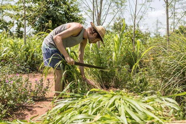 """Doryan Kuschner, un architecte spécialisé dans les matériaux naturels, s'occupe de plantes lors d'un """"agro-bootcamp"""", camp de formation à l'agro-écologie, le 16 avril 2019 à Tori-Bossito, au Bénin [Yanick Folly / AFP]"""