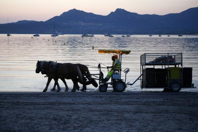 Chaque matin entre 05H00 et 09H30 dans la pinède de Calvi, un meneur d'attelage et deux ripeurs chargent les différentes poubelles triées sur l'hippomobile [PASCAL POCHARD-CASABIANCA / AFP]