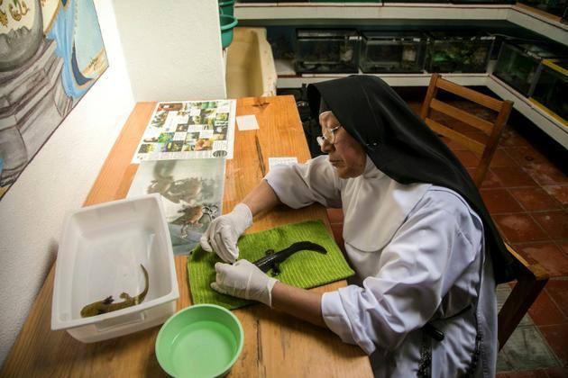 Soeur Ofelia Morales Francisco s'occupe d'une salamandre aquatique, dans son monastère au Mexique, le 22 août 2018 [ENRIQUE CASTRO / AFP]