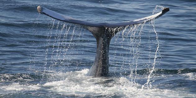 TOULOUSE : LE MYSTÈRE DE L'OVNI EN QUEUE DE BALEINE Baleine_cc_kohane_0