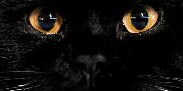 Pourquoi les chats noirs portent ils malheur www for Pourquoi ecossais portent kilt