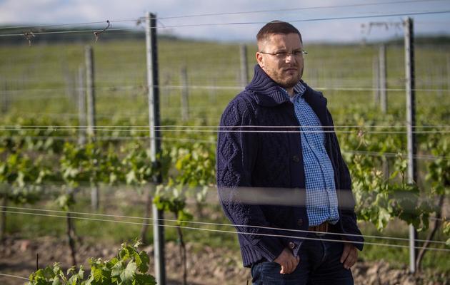 Roman Milata, le gestionnaire du vignoble d'Elesko, à Modra, à 30 km au nord de Bratislava [ / AFP]