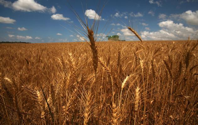 Un champ de blé [Menahem Kahana / AFP/Archives]