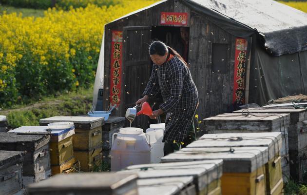 Un apiculteur chinois [AFP / AFP/Archives]