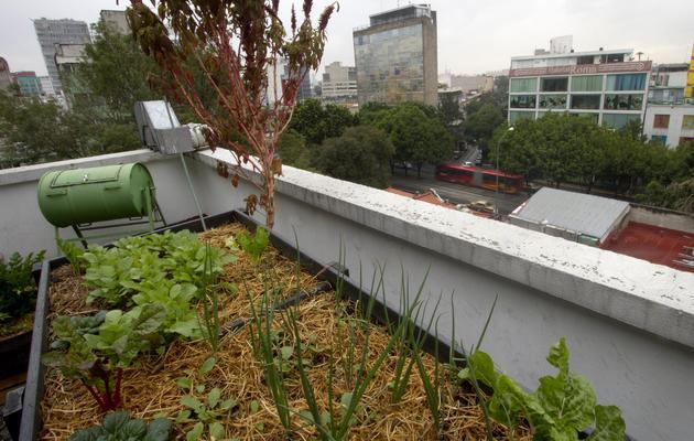Un verger biologique installé sur le toit d'un immeuble de Mexico, photographié le 6 novembre 2012 [Pedro Pardo / AFP/Archives]