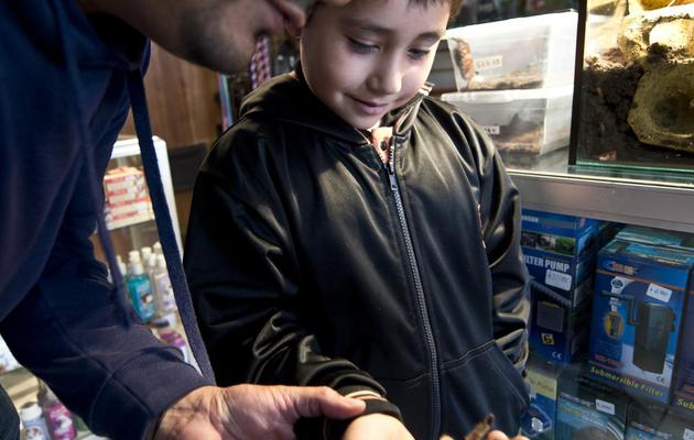 Un homme montre une mygale à son fils, dans une boutique de Batugo le 22 mai 2013 [Martin Bernetti / AFP]