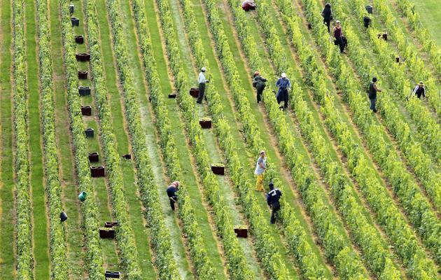 Des travailleurs dans les vignes de Montgueux, en région Champagne-Ardennes, le 13 septembre 2010 [Francois Nascimbeni / AFP/Archives]