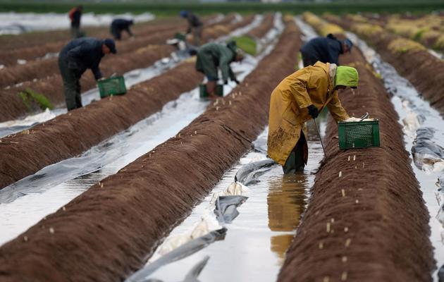 Des travailleurs saisonniers oeuvrent sous la pluie dans un champ à Hoerdt, dans l'est de la France, le 22 mai 2013 [Patrick Hertzog / AFP/Archives]