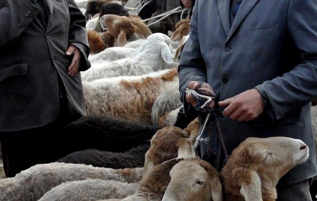 Des Ouïghours rassemblent leurs moutons au bazar de Hotan, le 7 novembre 2013 [Carol Huang / AFP]
