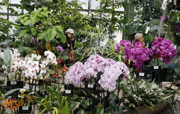 Printemps des orchidées au Jardin des Plantes | www.cnewsmatin.fr