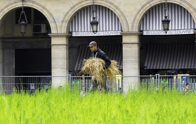 """Installation, le 1er juin 2013, de l'exposition """"L'INcroyable Récolte"""" au centre de Paris [Matthieu Rater / AFP]"""