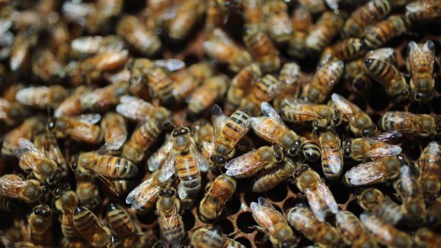 Le centre commercial Beaugrenelle, à Paris, compte 400 000 abeilles.