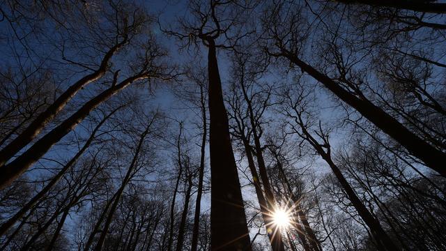 Selon cette étude, 900 000 millions d'hectares sur la Terre - soit environ la taille des Etats-Unis - seraient disponibles pour planter des arbres.