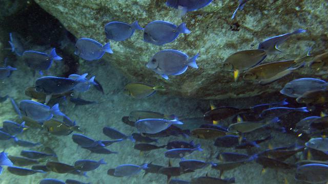 Photo sous-marine d'un banc de poissons prise, au large de l'île de Saint-Barthélémy. [Marcel Mochet / AFP/Archives]