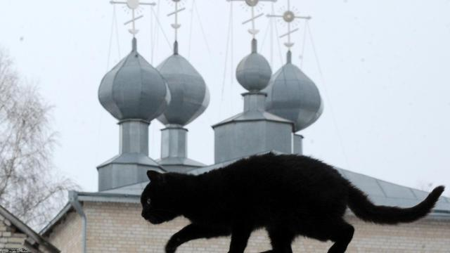 Un chat noir [Viktor Drachev / AFP/Archives]