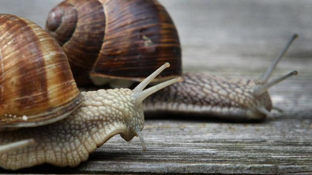 Deux escargots [Karl-Josef Hildenbrand / DPA/AFP/Archives]