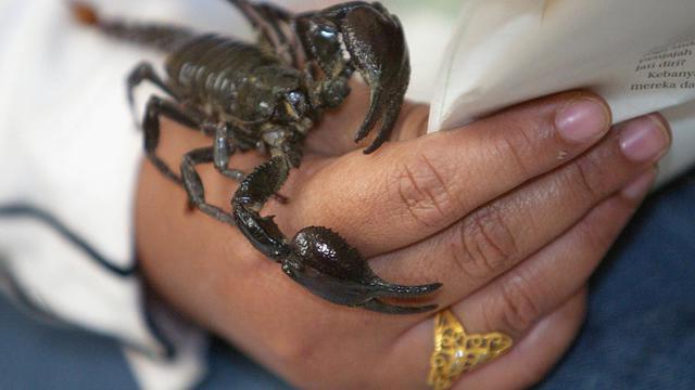 Un scorpion sur la main d'un homme [Jimin Lai / AFP/Archives]