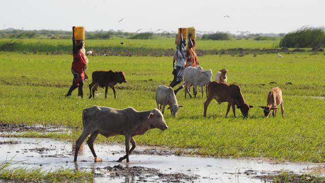 Au moins onze personnes ont été tuées vendredi à l'aube dans un nouveau raid à caractère ethnique dans le district rural de Tana River, dans le sud-est du Kenya, où au moins 52 personnes avaient été massacrées mi-août, a annoncé la Croix-Rouge kényane. [AFP]