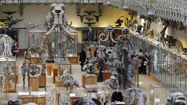 La galerie de paléontologie au Museum national d'Histoire naturelle de Paris [Patrick Kovarik / AFP/Archives]