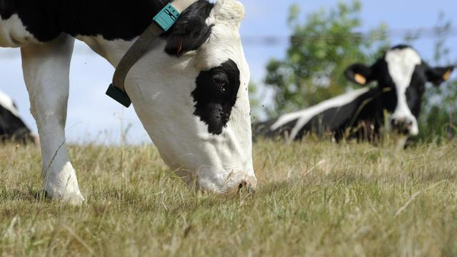 Des vaches [Philippe Desmazes / AFP/Archives]