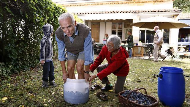 Alain foule aux pieds des raisins dans son jardin à Bordeaux, le 27 septembre 2012. [Patrick Bernard / AFP]