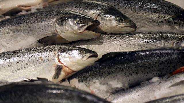 Des poissons [Joel Saget / AFP/Archives]