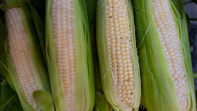 Des épis de maïs [Paul J. Richards / AFP/Archives]