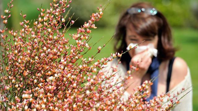 Allergies Aux Pollens Une Carte De France Rouge Ecarlate Cnews