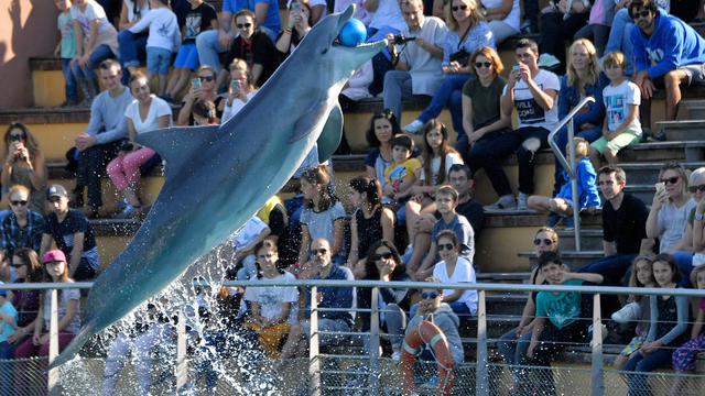 Un dauphin dans le parc La Planète Sauvage, en France