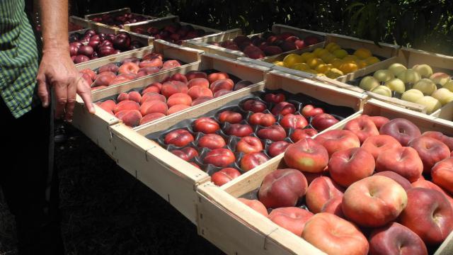 Parmi les mesures figure notamment l'accroissement de 5 à 10% du volume de fruits autorisés à être retirés du marché et distribués gratuitement [Sandra Laffont / AFP/Archives]