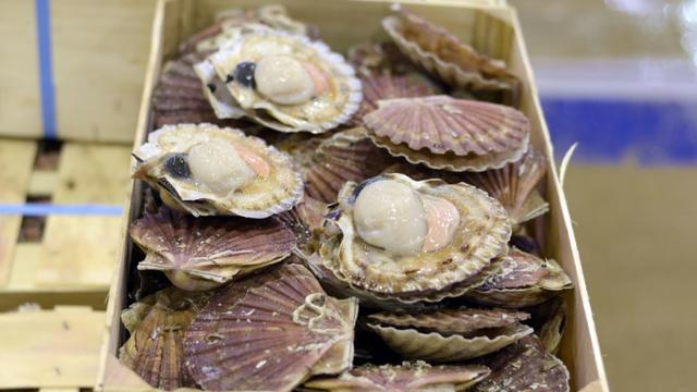 Les pêcheurs français et britanniques sont parvenus à trouver un accord sur la pêche de la coquille Saint-Jacques [ADRIEN MORLENT / AFP/Archives]