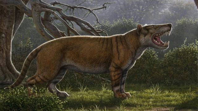 """Image fournie par l'Université d'Ohio le 18 avril 2019 d'un """"Simbakubwa kutokaafrika"""", l'un des plus grands mammifères carnivores terrestres [Mauricio ANTON, Mauricio ANTON / ohio university/AFP]"""