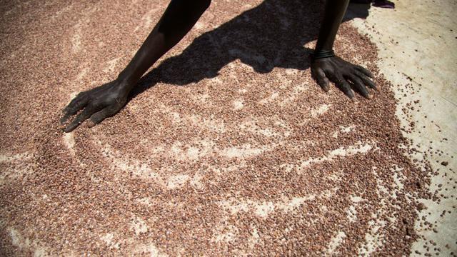 Dans le Soudan du Sud en mai 2017, une femme fait sécher de petites quantités de sorgho [Albert Gonzalez Farran / AFP/Archives]