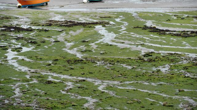 La baie de Locquirec (Finistère) envahie par les algues vertes, le 9 septembre 2013 [Fred Tanneau / AFP/Archives]