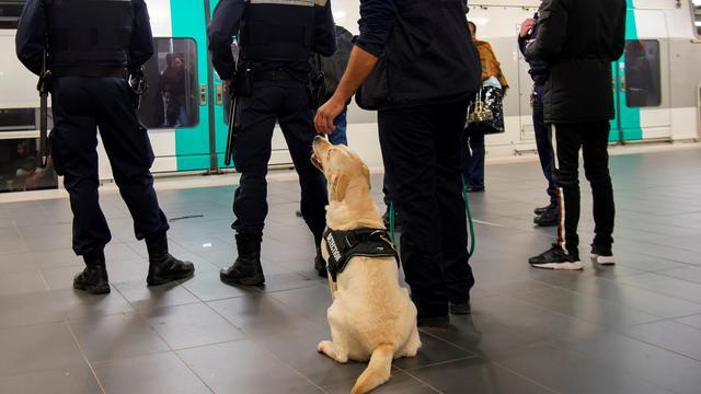 Le conducteur du chien et son animal patrouillent désormais au sein d'un groupe de protection et de sécurisation des réseaux (GPSR)