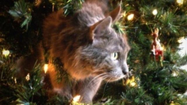 5 conseils pour un sapin de Noël plus résistant que votre chat