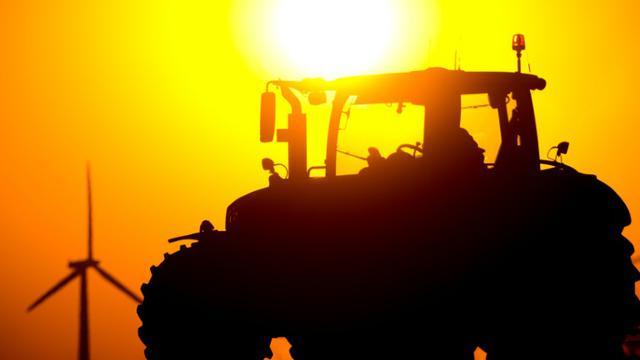 Les prix agricoles mondiaux ont enregistré en août une forte baisse et atteint leur plus bas niveau en sept ans, principalement en raison de l'abondance de l'offre [Patrick Pleul / DPA/AFP/Archives]