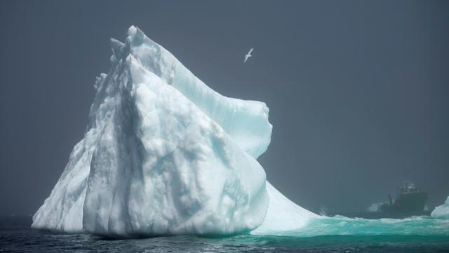 Un iceberg qui s'aventure plus loin dans les eaux canadiennes de la baie de Bonavista le 29 juin 2019 à Terre-Neuve [Johannes EISELE / AFP/Archives]