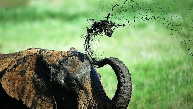 Un éléphant prend un bain de boue dans une réserve au pied du Mont Kenya, à environ 300 kilomètres au nord de la capitale Nairobi, le 21 mai 2015 [Tony KARUMBA / AFP/Archives]