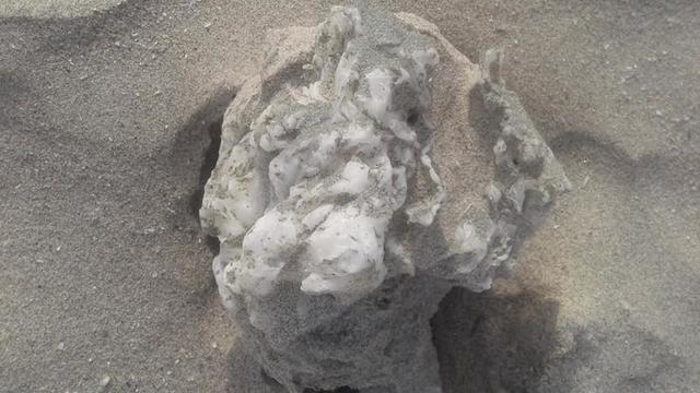 Des prélèvements effectués serviront à analyser la composition exacte des nombreuses boulettes retrouvées échouées.