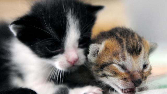 Des chatons [Raul Arboleda / AFP/Archives]