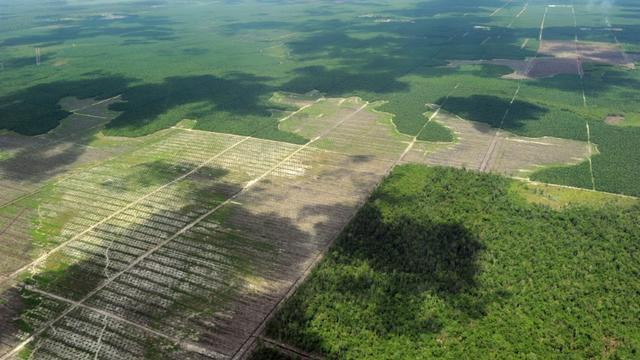 Forêts et plantations de palmiers à huile en Indonésie en 2010 [Romeo GACAD / AFP/Archives]