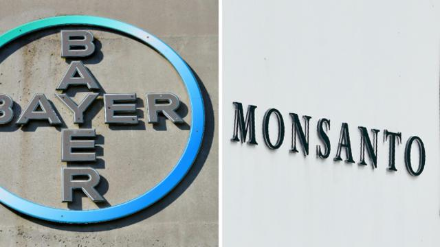 Les logos des entreprises Bayer et Monsanto [Patrik STOLLARZ, John THYS / AFP/Archives]