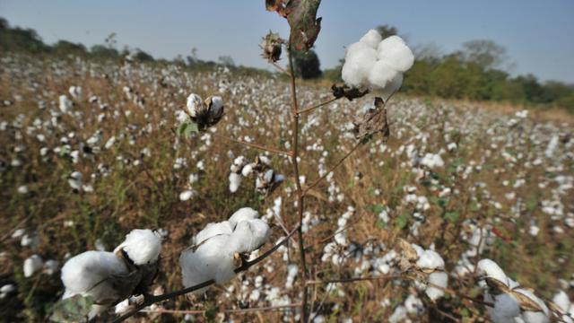 La Turquie, importatrice nette de coton pour la fabrication de vêtements, compte la Syrie parmi ses principaux fournisseurs [Issouf Sanogo / AFP/Archives]